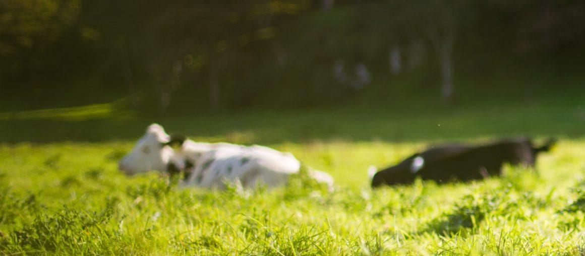 Pousse de l'herbe : hétérogène selon les secteurs