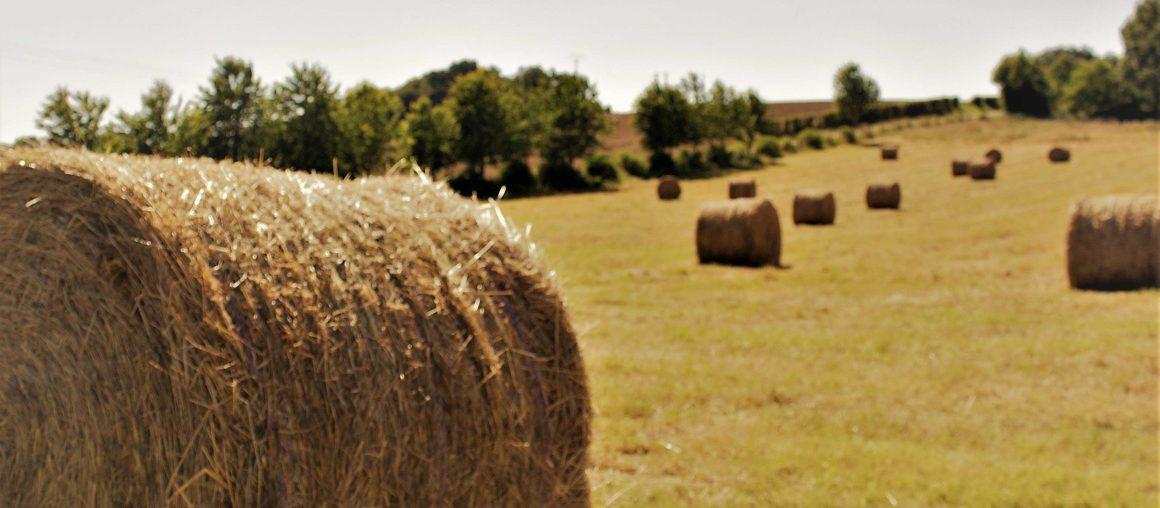 Gestion de l'herbe : préparer l'été
