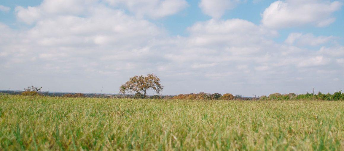 Herbophyl'hebdo : pensez à vos semis d'automne
