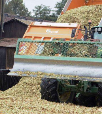 MS maïs : état des lieux au 13 septembre