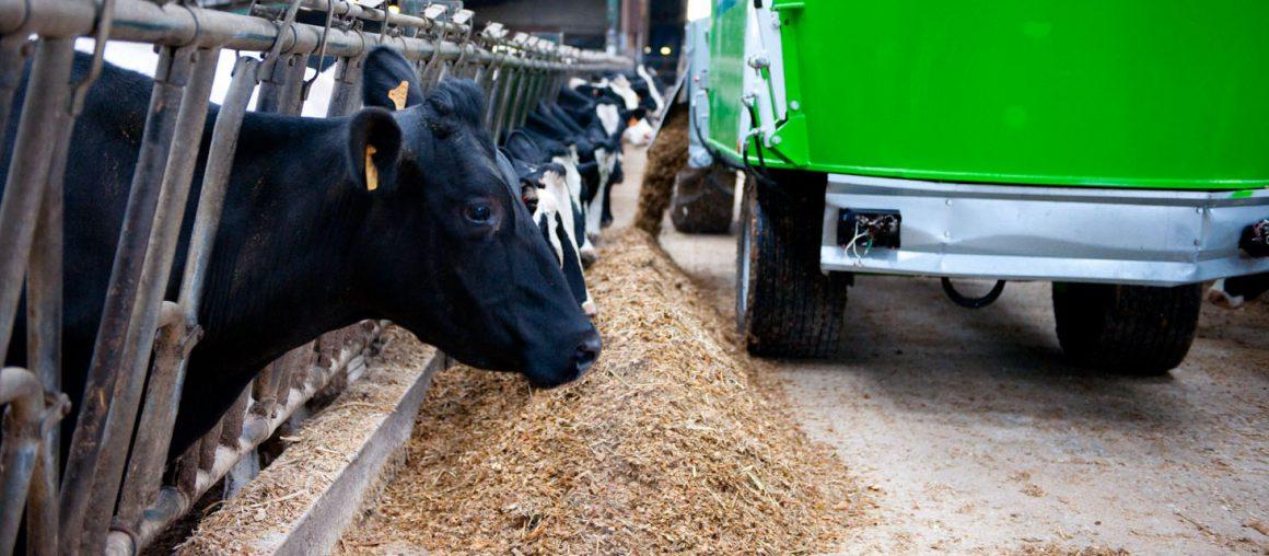 Valorisation du maïs ensilage
