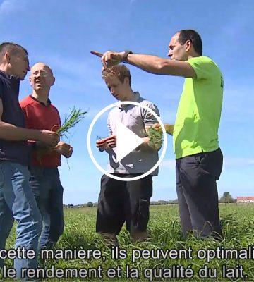 Gestion des pâturages : comparaison des habitudes flamandes et françaises