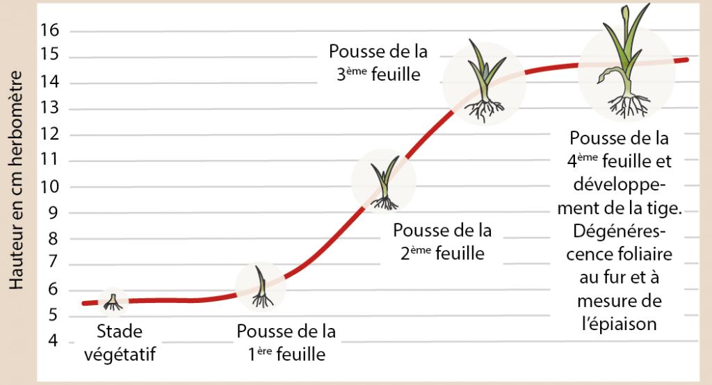 courbe de pousse de l'herbe-ACE