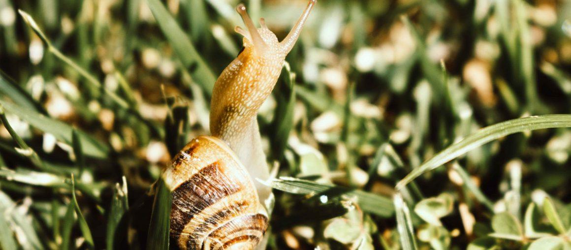 Les Herbophyles : la pousse ralentit