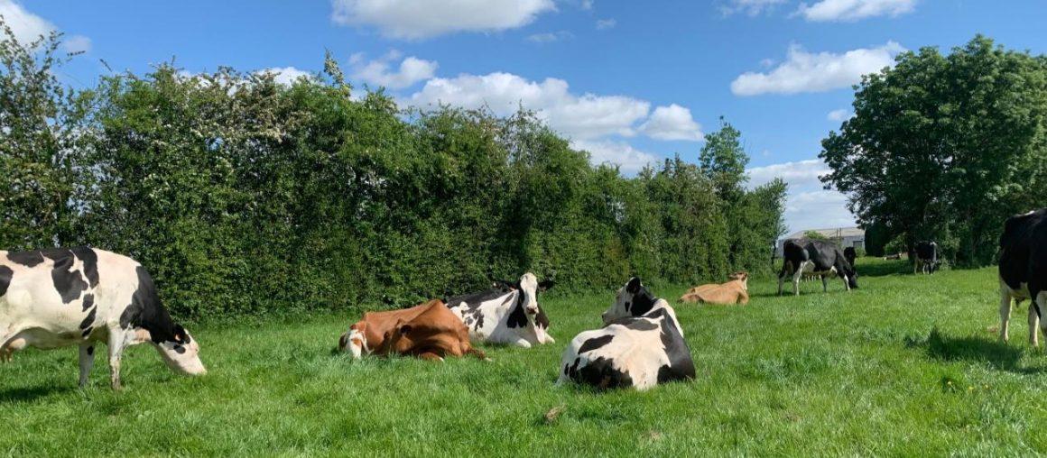 Suivi herbe bio : la pluie se fait désirer, il faut s'adapter !
