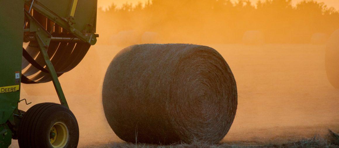 Les Herbophyles : Un manque à compenser