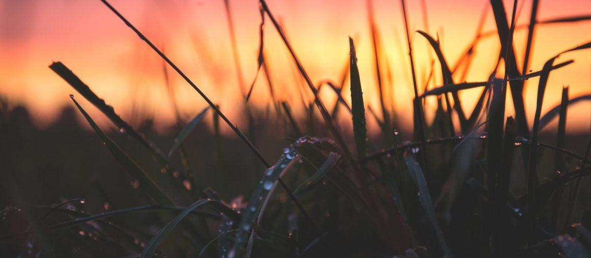 Les Herbophyles : une pousse qui se fait attendre