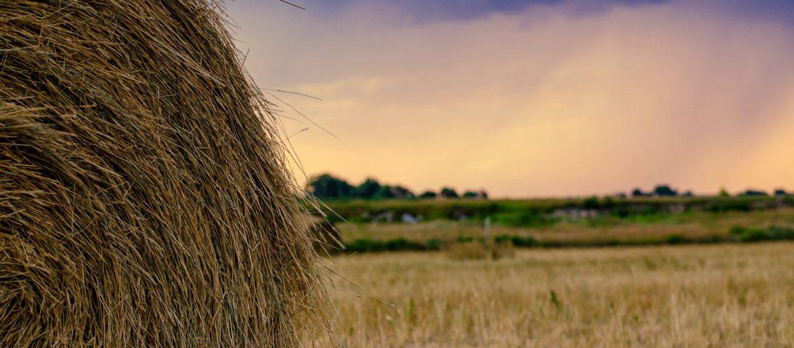 Les Herbophyles : Adapter la ration d'été et saisir les opportunités