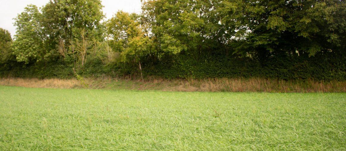 L'herbe verte de la rentrée