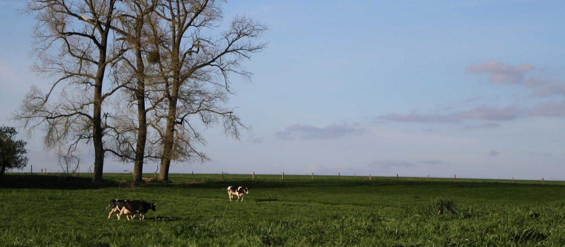 Les Herbophyles : De l'herbe, oui mais pas trop