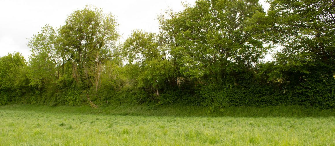 Les Herbophyles : l'herbe enfin là !