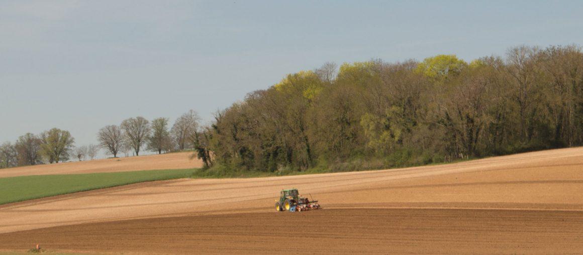 Maïs 2021 : semis et levée