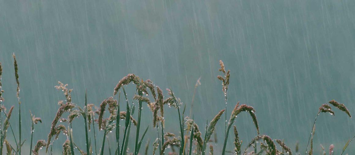 Les Herbophyles : le printemps continue !
