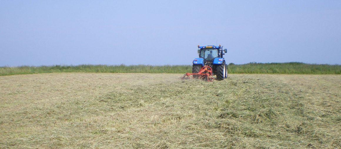 Les Herbophyles : Profitez de l'herbe d'été